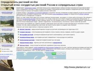 http://www.plantarium.ru/ Определитель растений on-line Открытый атлас сосуд