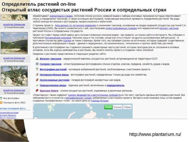 http://www.plantarium.ru/ Определитель растений on-line Открытый атлас сосуд...