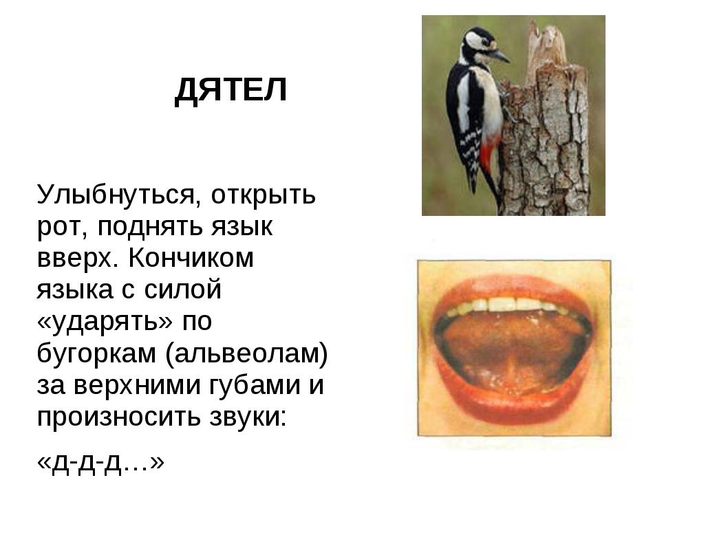 ДЯТЕЛ Улыбнуться, открыть рот, поднять язык вверх. Кончиком языка с силой «у...