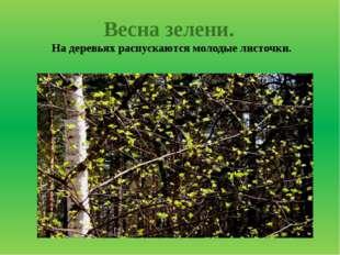 Весна зелени. На деревьях распускаются молодые листочки.
