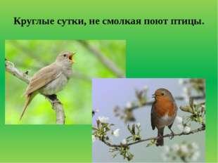 Круглые сутки, не смолкая поют птицы.