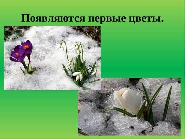 Появляются первые цветы.