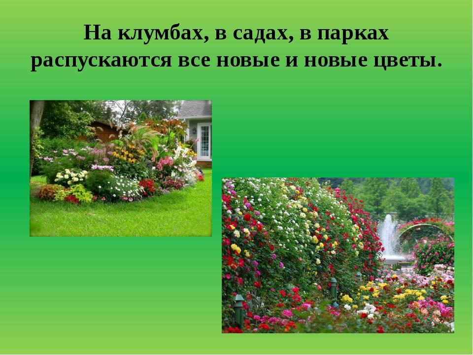 На клумбах, в садах, в парках распускаются все новые и новые цветы.