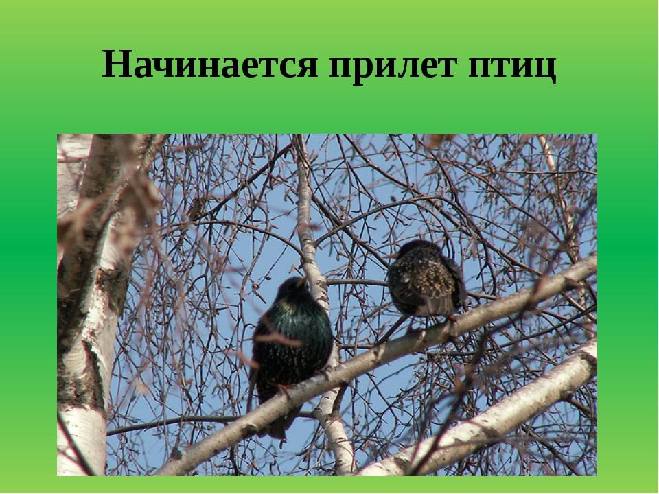 Начинается прилет птиц