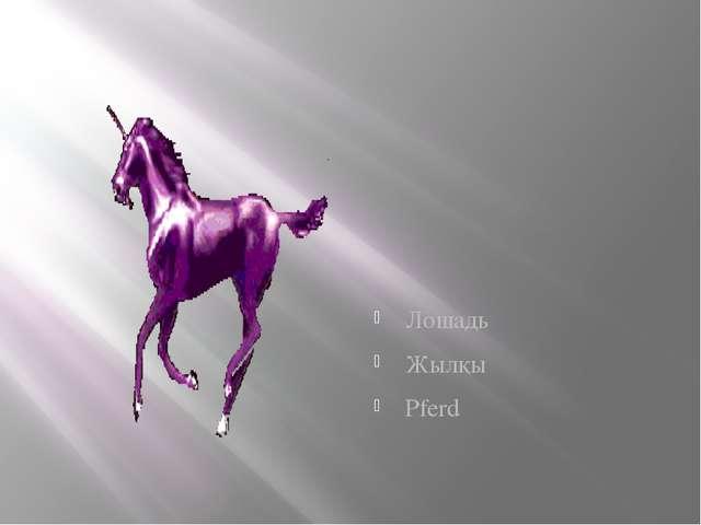 Лошадь Жылқы Pferd