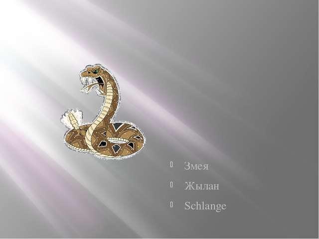Змея Жылан Schlange