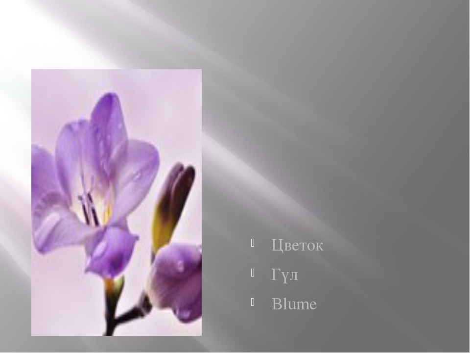Цветок Гүл Blume