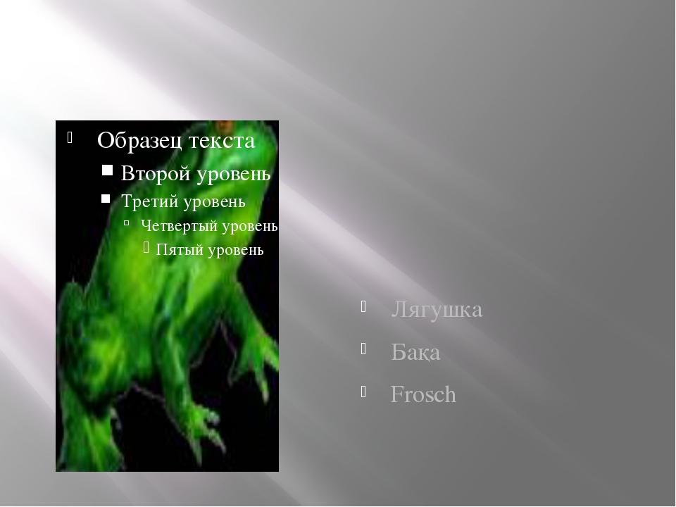 Лягушка Бақа Frosch