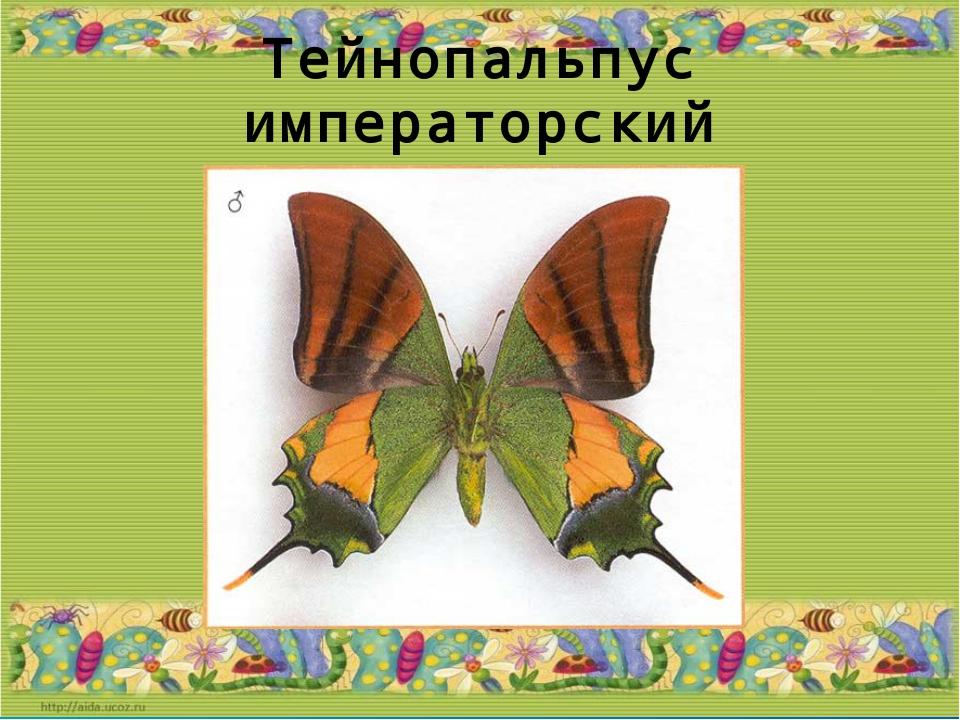 Тейнопальпус императорский