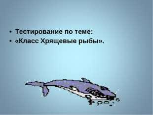 Тестирование по теме: «Класс Хрящевые рыбы».