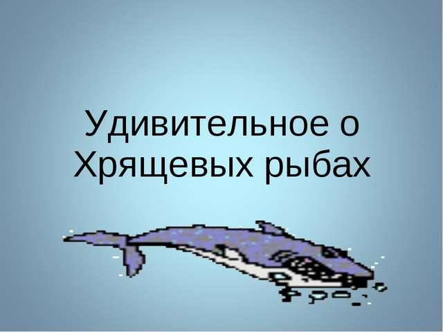 Удивительное о Хрящевых рыбах