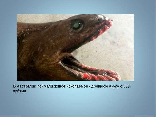 В Австралии поймали живое ископаемое - древнюю акулу с 300 зубами
