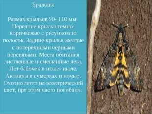 Бражник Размах крыльев 90- 110 мм . Передние крылья темно-коричневые с рисун