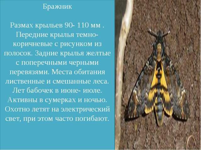 Бражник Размах крыльев 90- 110 мм . Передние крылья темно-коричневые с рисун...