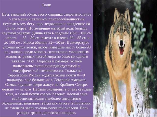 Волк Весь внешний облик этого хищника свидетельствует о его мощи и отличной п...