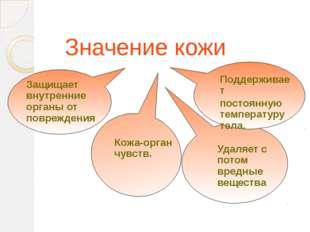 Значение кожи Защищает внутренние органы от повреждения Кожа-орган чувств. П