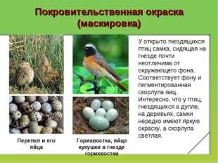 Покровительственная окраска (маскировка) У открыто гнездящихся птиц самка, си