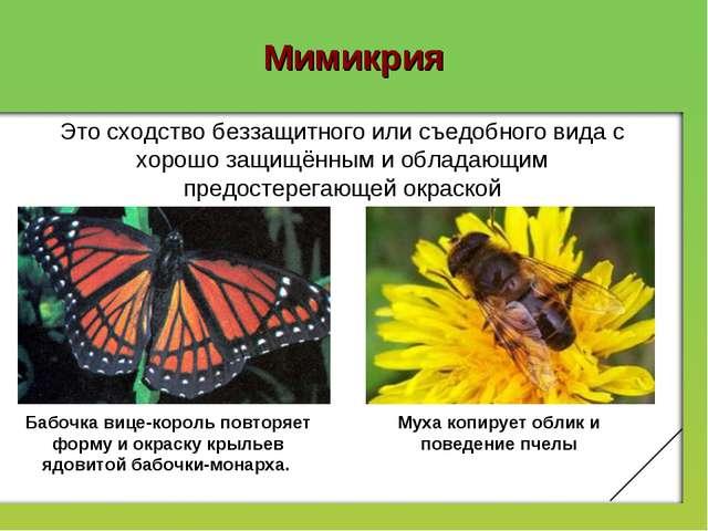 Мимикрия Бабочка вице-король повторяет форму и окраску крыльев ядовитой бабоч...
