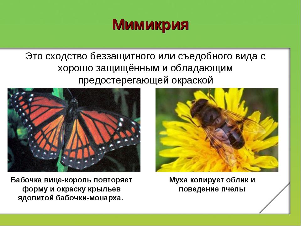 Доклад мимикрия по биологии 6959