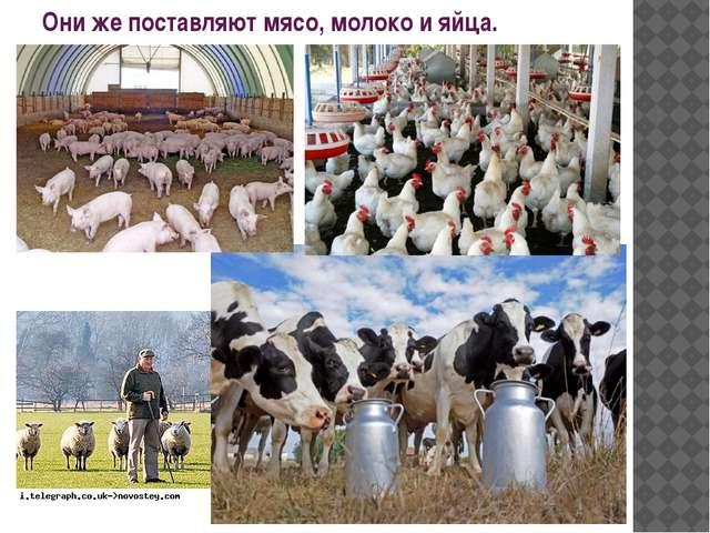 Они же поставляют мясо, молоко и яйца.