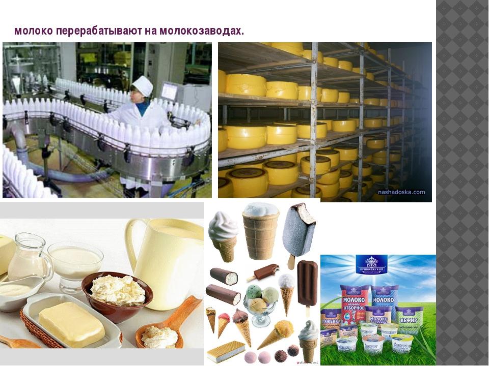 молоко перерабатывают на молокозаводах.