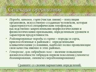 Селекция организмов Порода, штамм, сорт (чистая линия) – популяция организмов