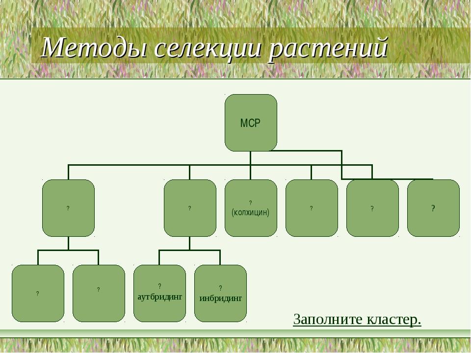 Методы селекции растений Заполните кластер.