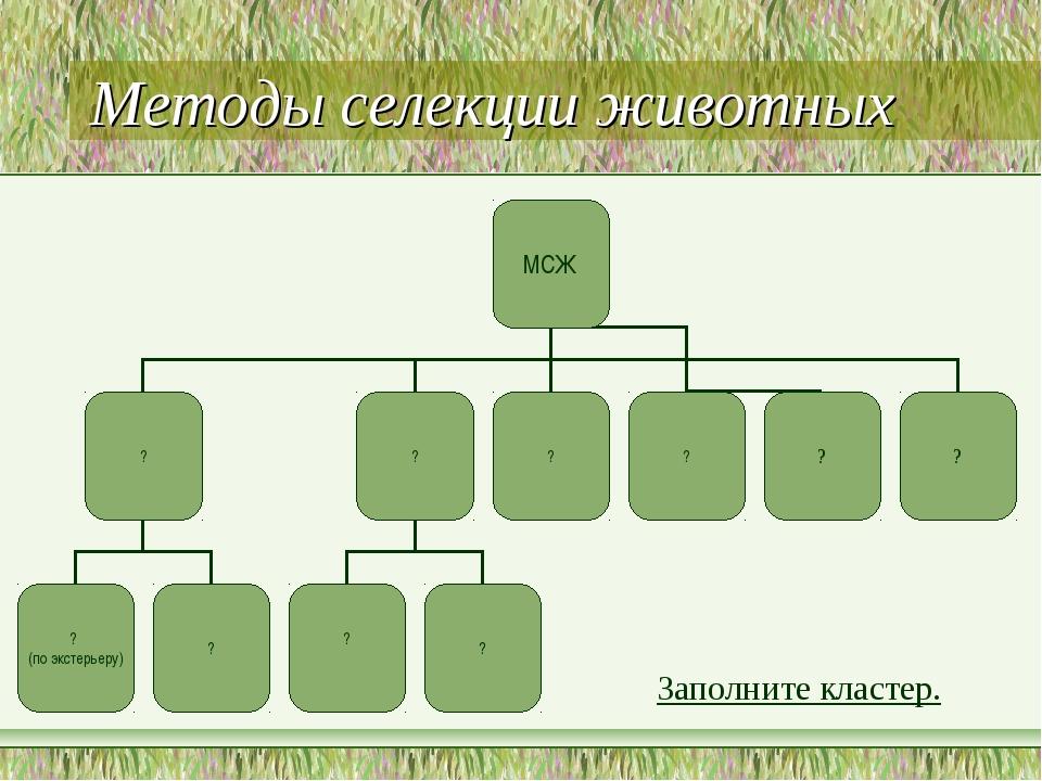 Методы селекции животных Заполните кластер.