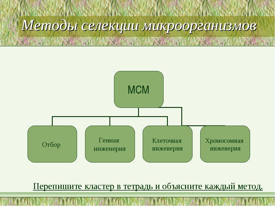 Методы селекции микроорганизмов Перепишите кластер в тетрадь и объясните кажд...