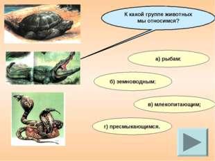 К какой группе животных мы относимся? а) рыбам; б) земноводным; в) млекопитаю