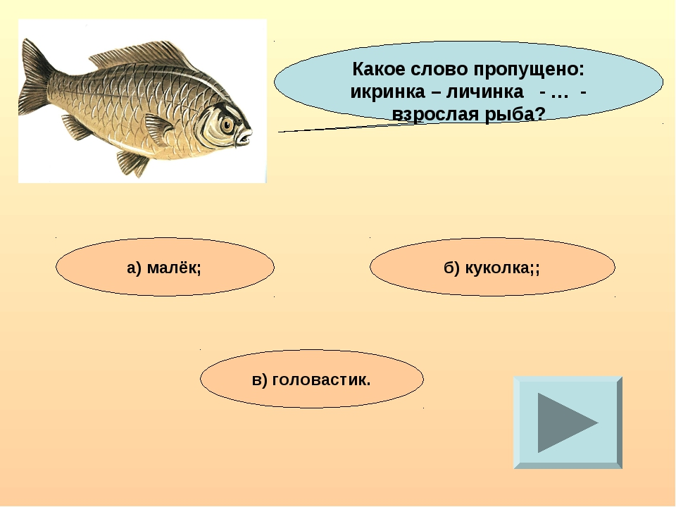 Какое слово пропущено: икринка – личинка - … - взрослая рыба? а) малёк; б) ку...