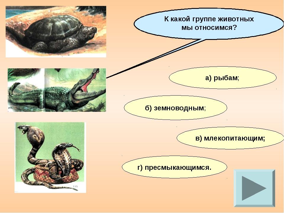 К какой группе животных мы относимся? а) рыбам; б) земноводным; в) млекопитаю...