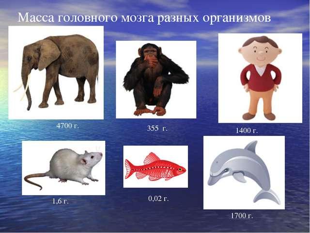 Масса головного мозга разных организмов 4700 г. 355 г. 1400 г. 1,6 г. 1700 г....
