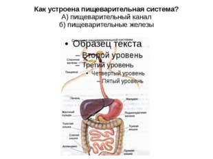 Как устроена пищеварительная система? А) пищеварительный канал б) пищеварител