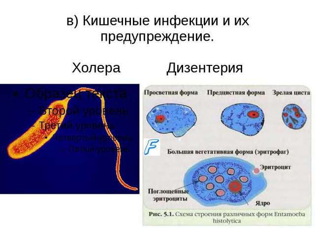 в) Кишечные инфекции и их предупреждение. Холера Дизентерия