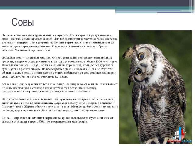 Совы Полярная сова — самая крупная птица в Арктике. Голова круглая, радужница...