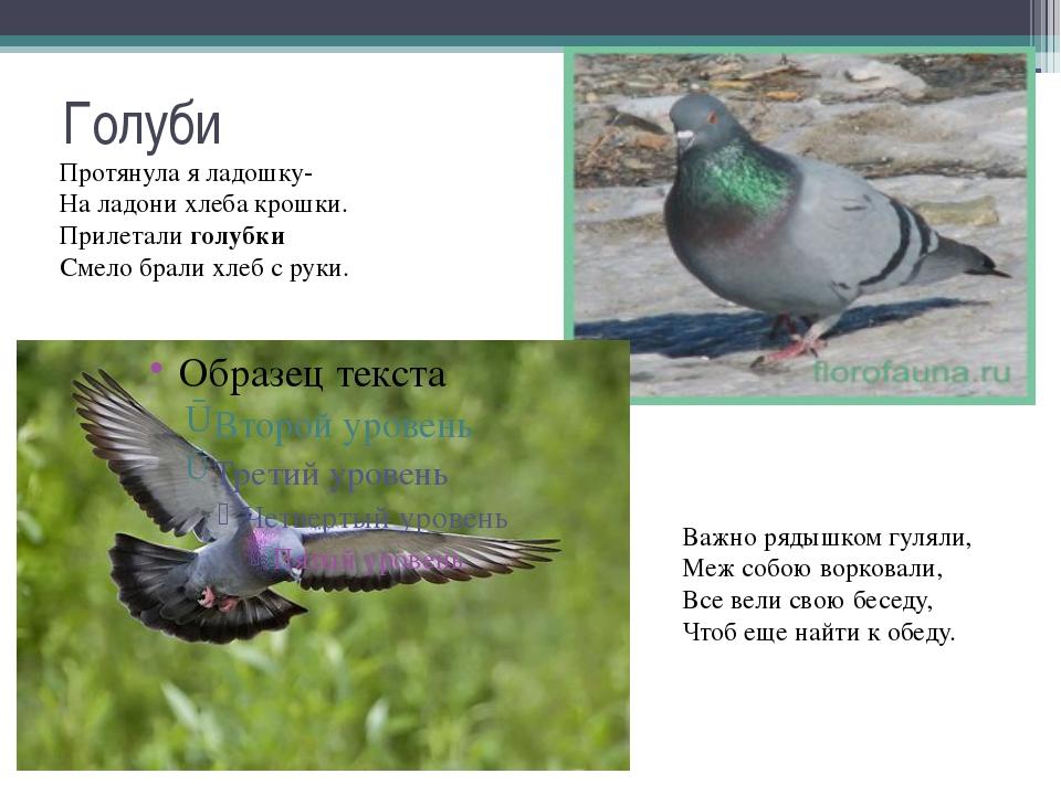 Короткий стих про голубей