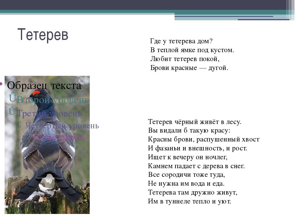 Стих о тетереве для детей