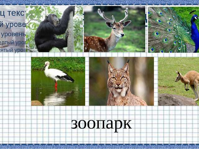 Заголовок слайда зоопарк