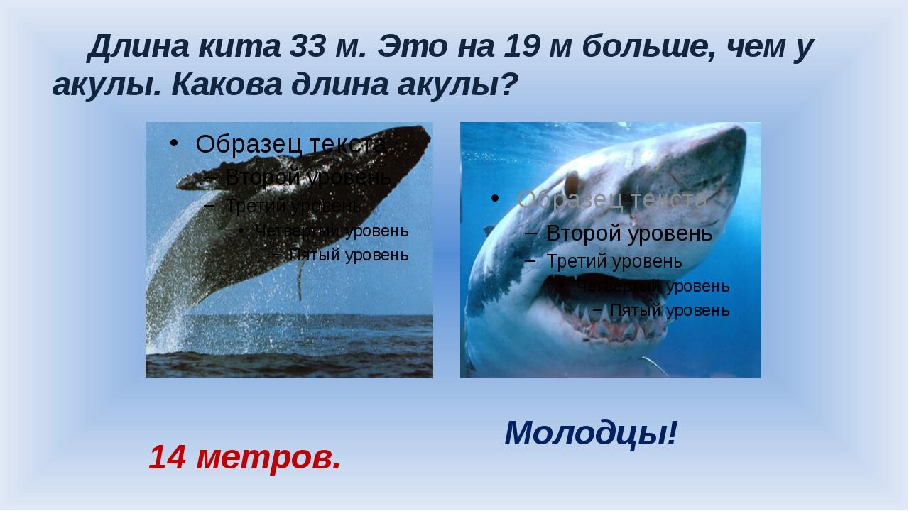 Длина кита 33 м. Это на 19 м больше, чем у акулы. Какова длина акулы? 14 мет...