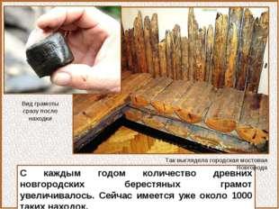 С каждым годом количество древних новгородских берестяных грамот увеличивалос