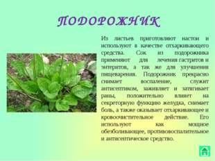 ОБЛЕПИХА Эта целебная осенняя ягода, а также ее листья и даже ветки содержат