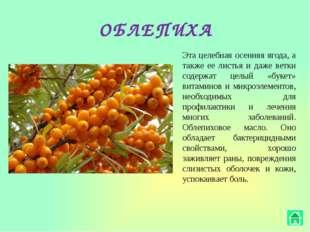 МАЛИНА Помимо того, что малина необычайно вкусная, ее лечебные свойства также