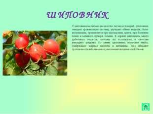 РОМАШКА Ромашка – универсальное лекарственное растение, которое можно употреб