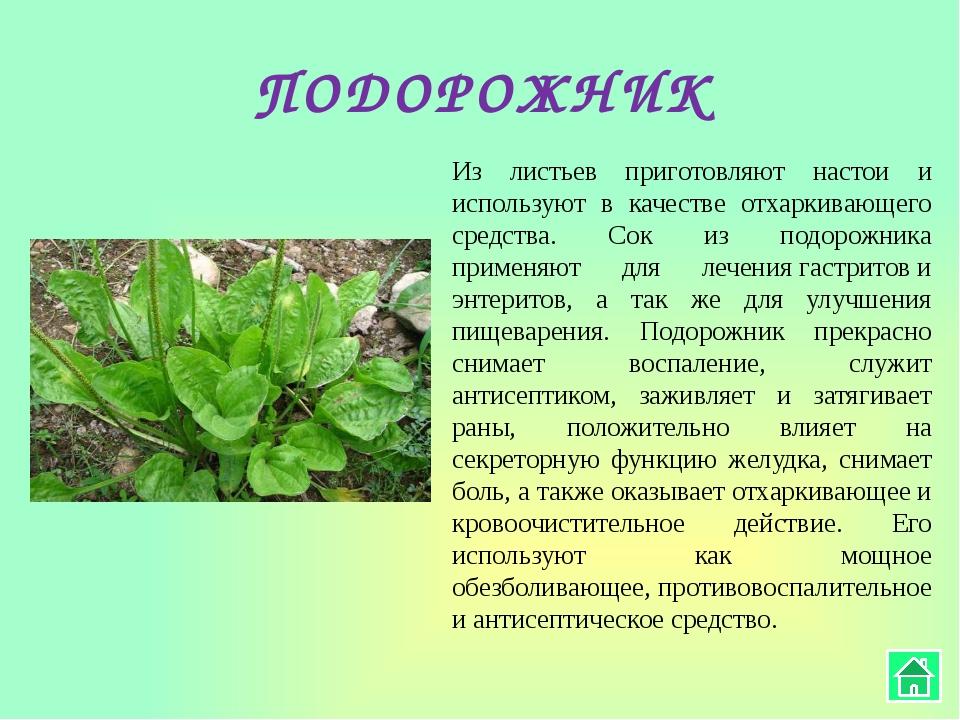 ОБЛЕПИХА Эта целебная осенняя ягода, а также ее листья и даже ветки содержат...