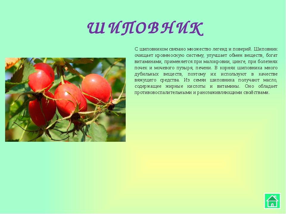 РОМАШКА Ромашка – универсальное лекарственное растение, которое можно употреб...