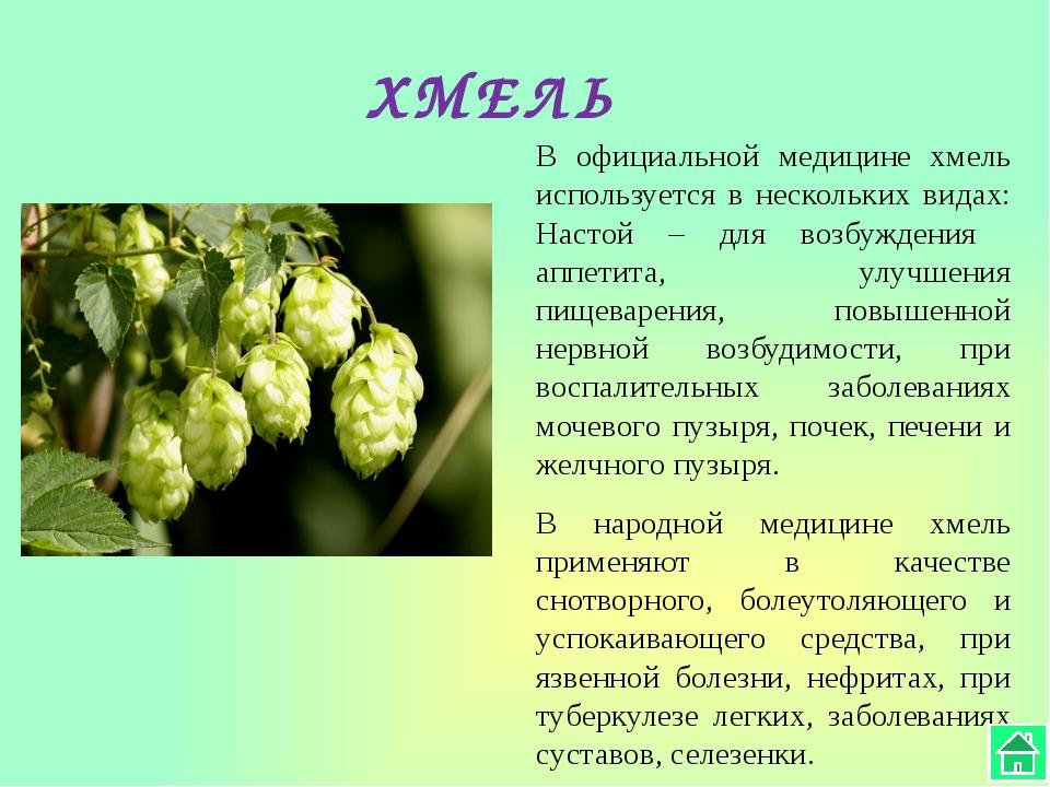 ШАЛФЕЙ Растению присущи ярко выраженные противовоспалительные, антимикробные,...