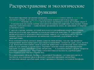 Распространение и экологические функции Хемосинтезирующие организмы (например