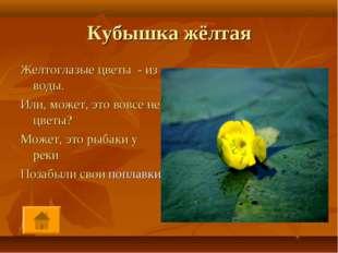 Кубышка жёлтая Желтоглазые цветы - из воды. Или, может, это вовсе не цветы? М
