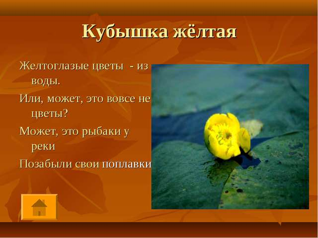 Кубышка жёлтая Желтоглазые цветы - из воды. Или, может, это вовсе не цветы? М...